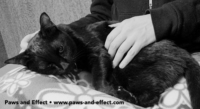 Did I Do the Right Thing When I Had My Cat Euthanized?