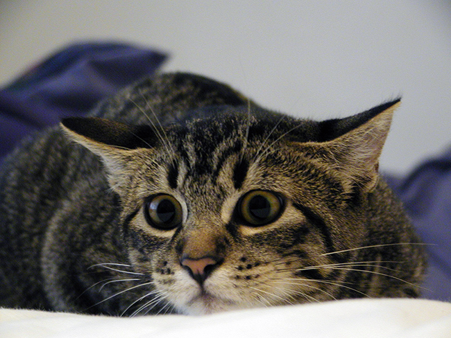 It can be difficult to work with a scared cat, but we have some tips that could help!