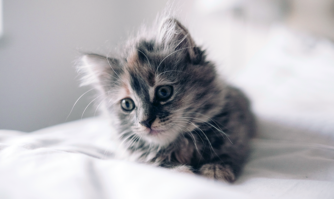 Hannah's kitten goes nuts at bedtime, and she wants to know why. We have some answers in this week's post.
