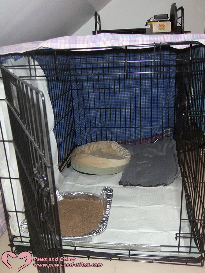 A medium-sized dog crate, puppy pads, a comfortable bed, and a litter box make for a cat-friendly kennel.