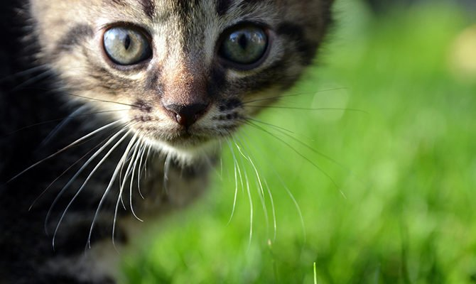 Can cats react to a traumatic episode by getting sick at the same time every year? Believe it or not, PTSD in cats is real, and we can help.