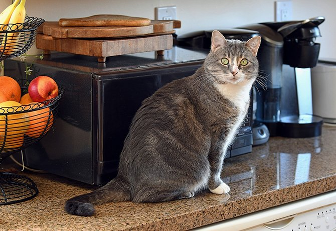 How To Stop Cats From Getting On Kitchen Counters