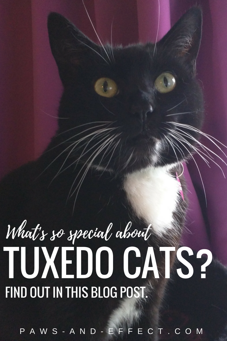 What's so special about tuxedo cats? Quite a bit, actually. Find out all about tuxedo cats and a man who's advocating for them.