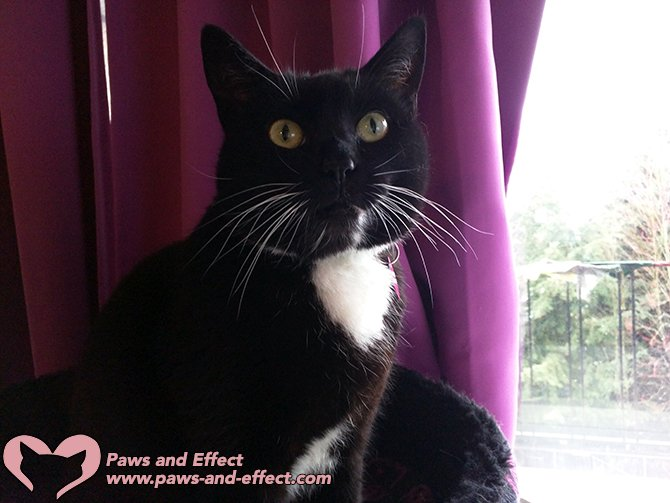 Tuxedo Cat Starts Website To Advocate For Other Tuxies Cat Advice