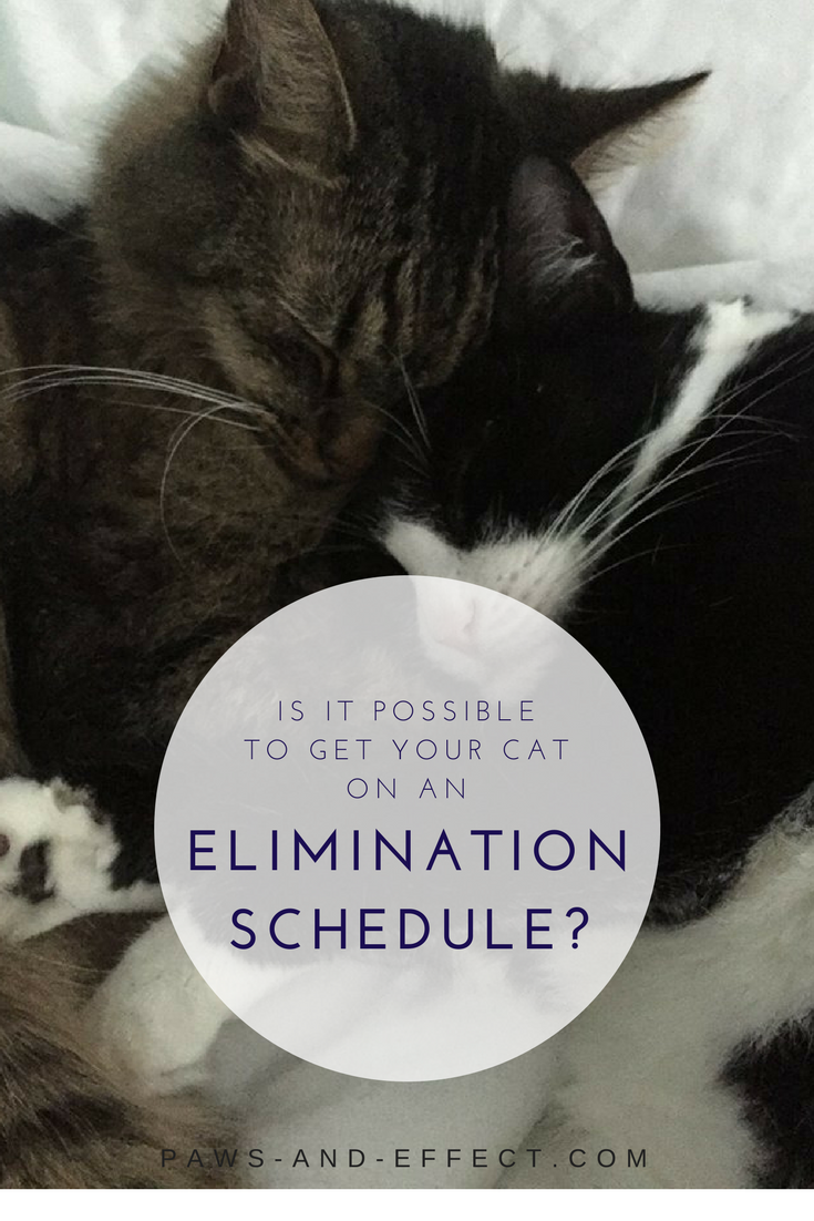 Alix wants to know: Is it possible to get her cat on an elimination schedule? He's pooping at 4 a.m. and disturbing her sleep with all his digging. This is a new one on us, but we've got some ideas about how to get your cat pooping on a more convenient schedule in this week's post!