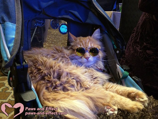 This year marked the 10th anniversary of BlogPaws, the pet bloggers' conference that gave me confidence and made me great friends. There's a new chapter in the life of the conference, but I met lots of cool cats (and cool people, too).