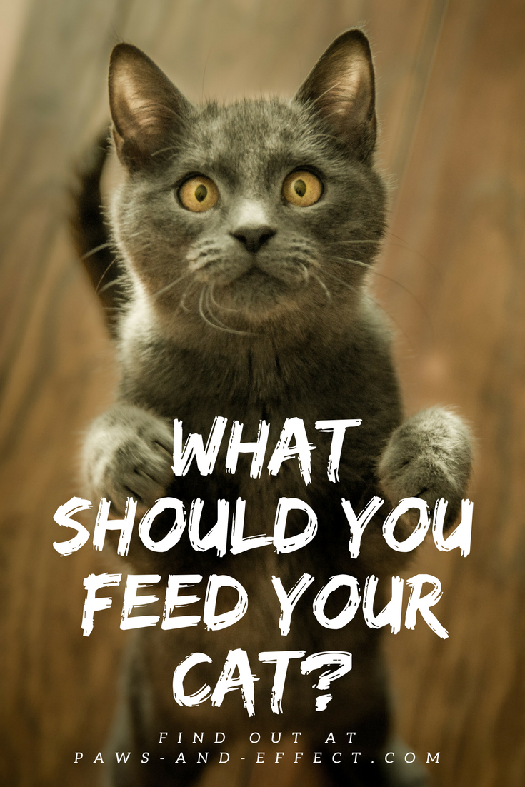 What should you feed your cat? That's an age-old and very contentious question. We've got some tips, both from veterinarians and from our own experience, in this week's post.