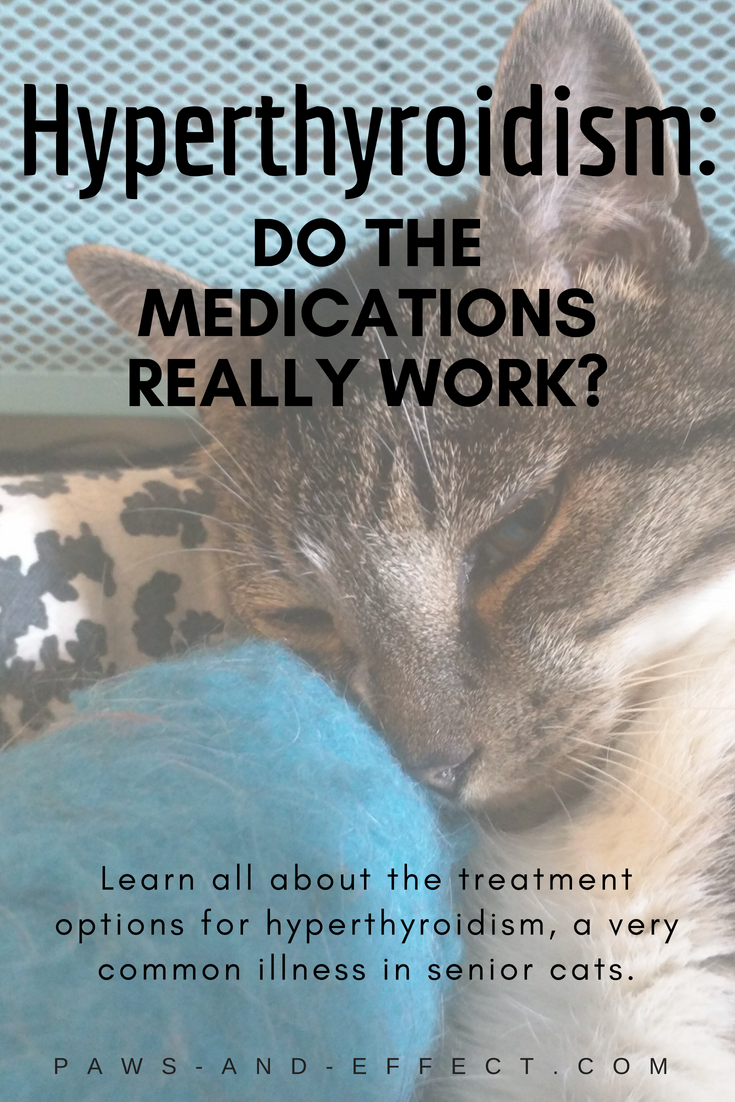 Hyperthyroidism--an illness where a cat's thyroid gland starts producing excessive hormones--is pretty common in senior cats. There are three main types of treatment, including medication. But does the medication actually work? That's what Lisa wants to know. We're telling her all about it in this week's post.