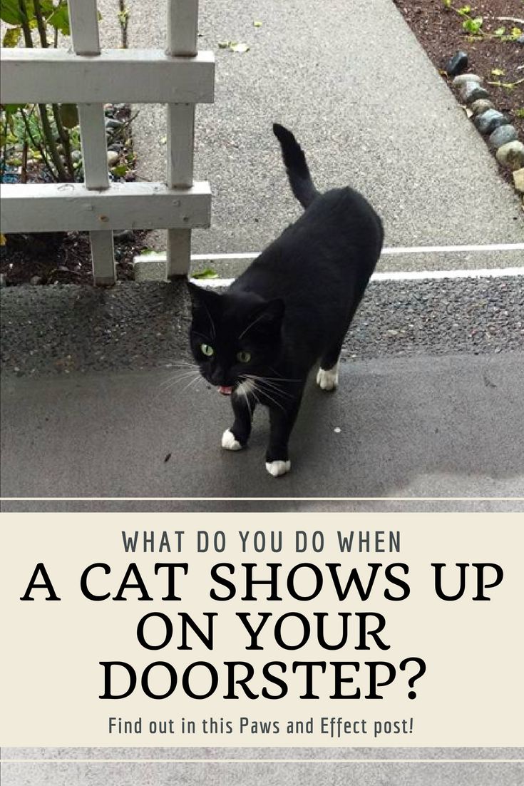 What do you do when a stray cat shows up on your doorstep? Here are some tips to help you reunite a cat with their person!