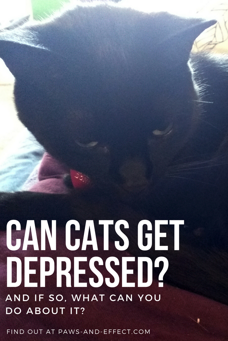 Although vets say that cats can experience behaviors that look like depression, they don't necessarily believe cats can GET depression. That's a little different from our experience, although we think that a lot of cats' depressive symptoms go along with grief. What can you do to help a cat who's experiencing grief or depression? Get a few tips in this post.