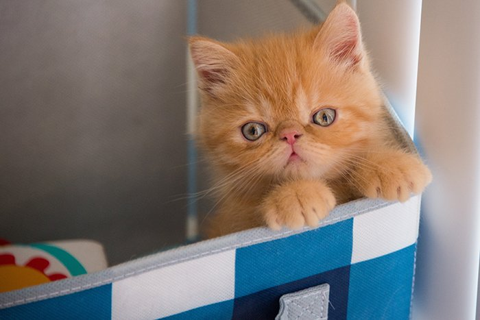 Amanda and her husband are expecting a baby. How can they prepare the cats for the new arrival? Here are some tips on how to prepare a cat for a baby.