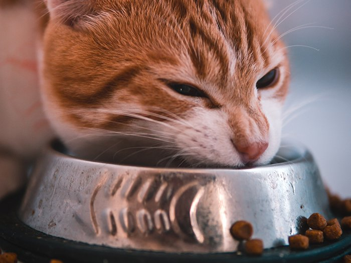 What's the Truth About Feeding Cats?