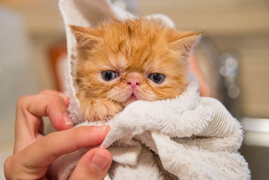 Emma gives her cat a bath when she gets outside or when she feels dirty. But should you bathe your cat? And if so, how often?