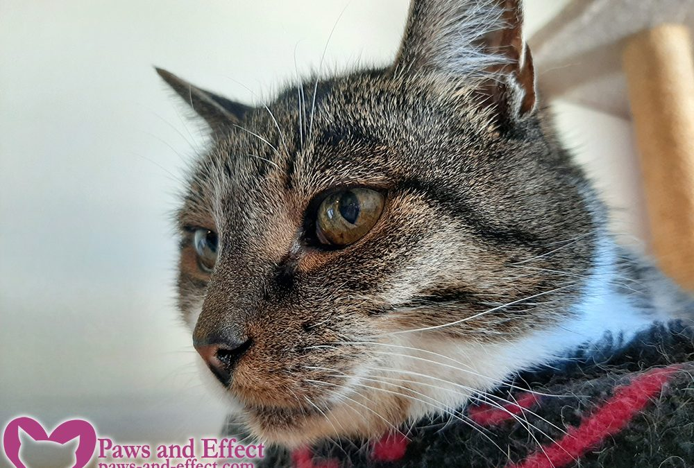 Can't Adopt a Senior Cat? Try Hospice Foster.