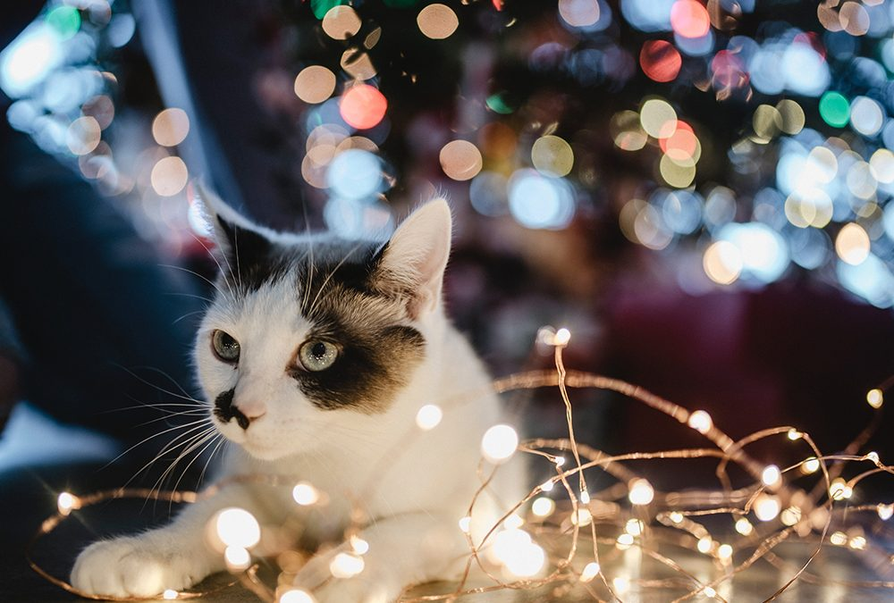 What You Should Do if Your Child Wants a Cat for Christmas