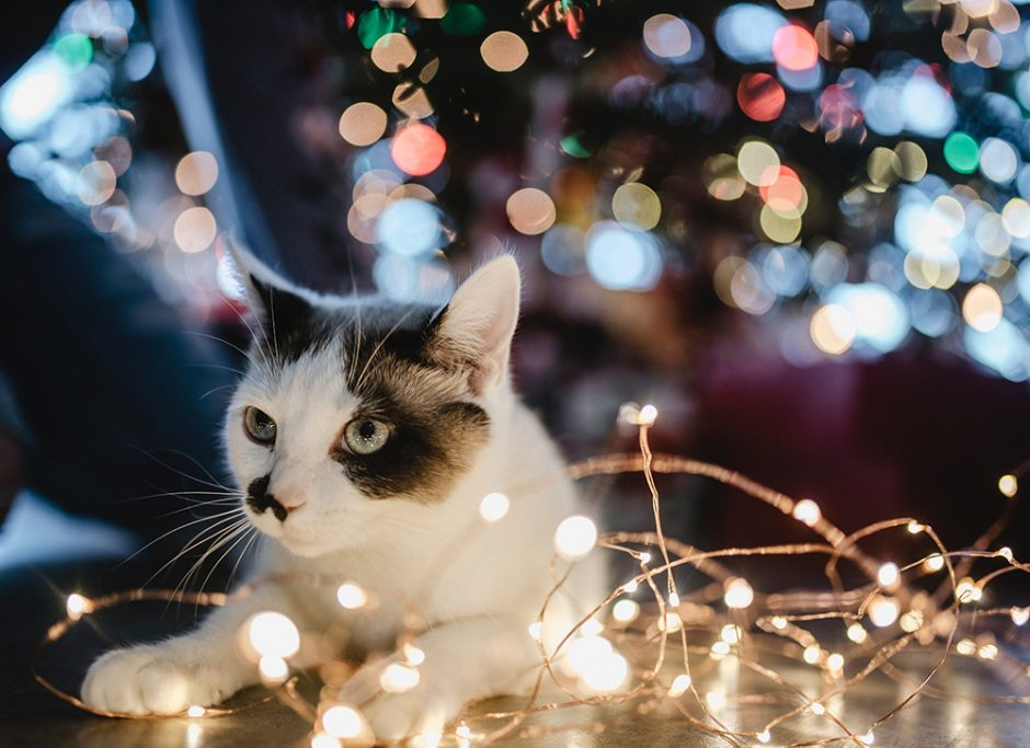 Jessica's son wants a cat for Christmas, but she wants to do it right. Here's what you should do if your child wants a cat for Christmas.