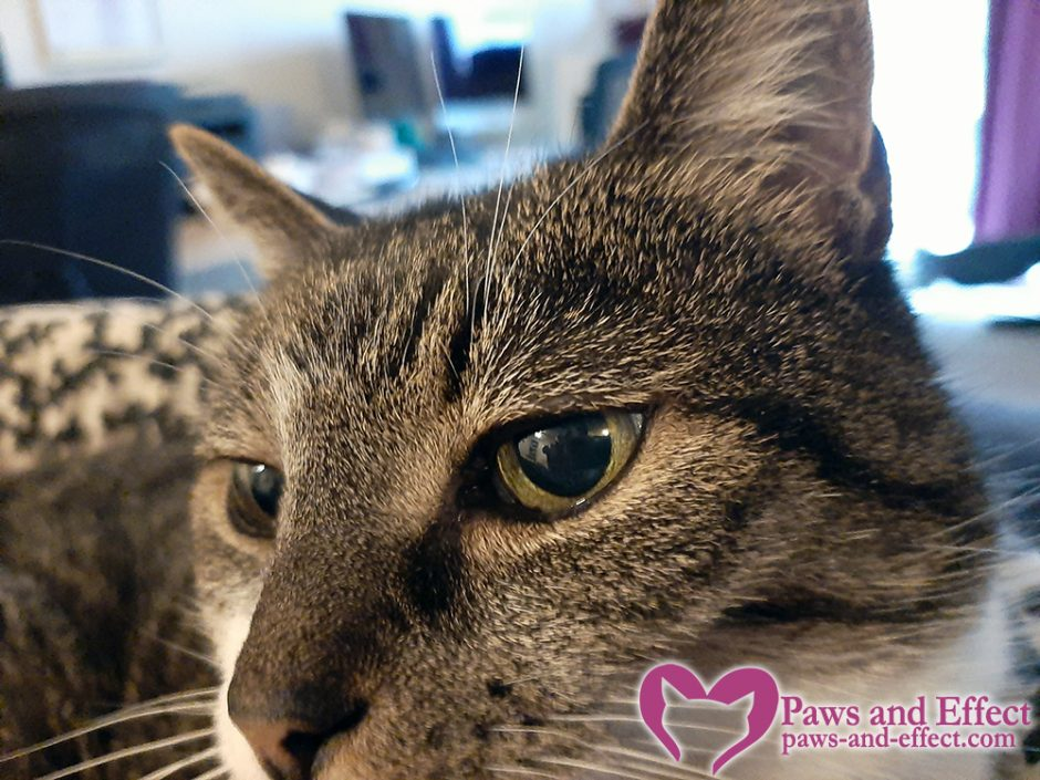 Alison's cat has diabetes and recently went blind, which is causing peeing issues. Here are some tips on how to help a blind cat adjust to her disability.